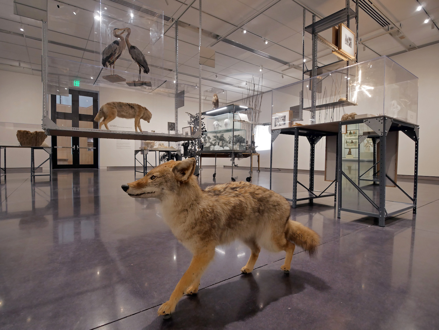 CU Visual Art Museum exhibit. (Photo by Glenn Asakawa/University of Colorado)