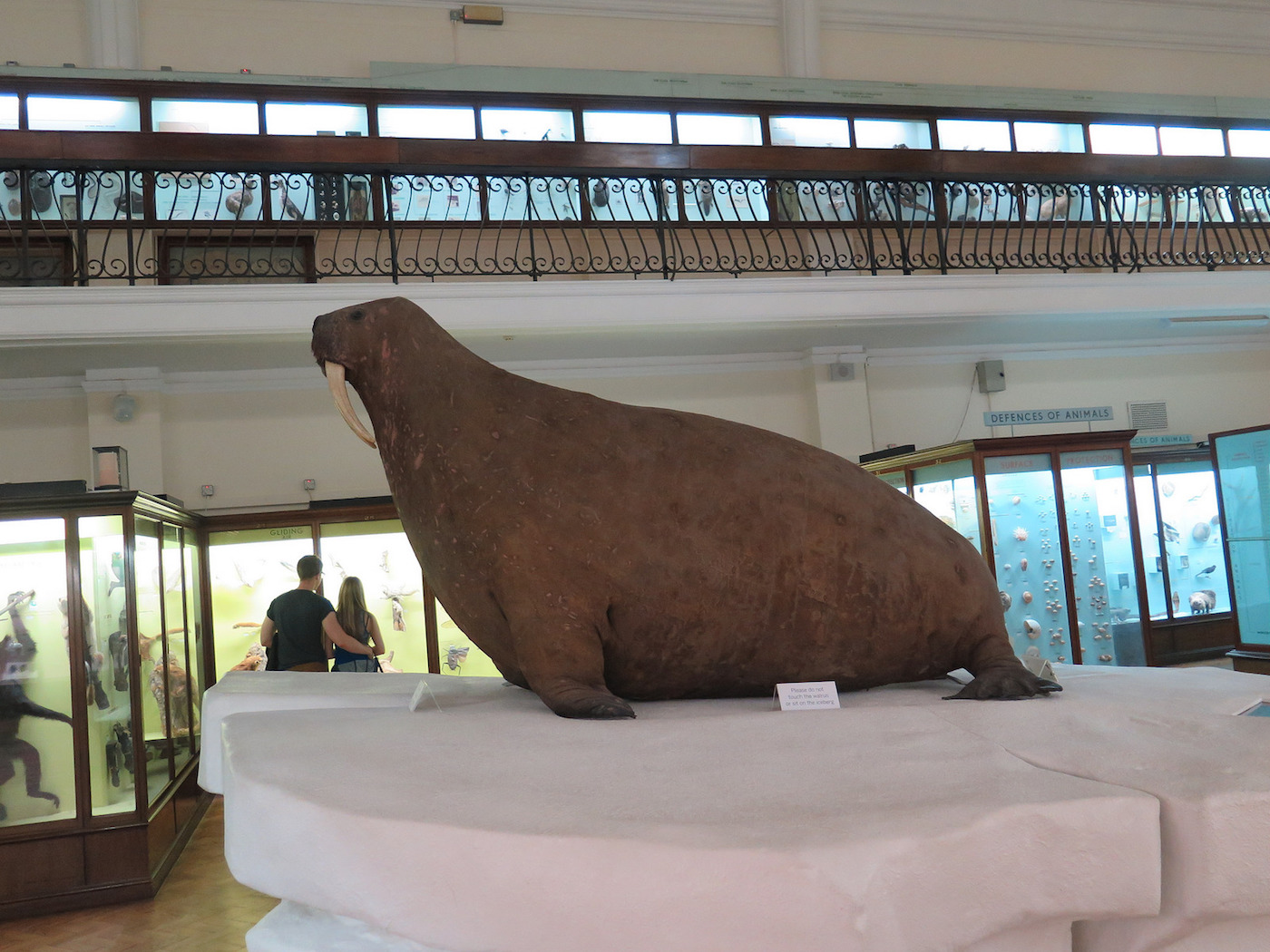 Walrus at the Horniman Museum & Gardens in London (photo by Régine Debatty/Flickr)