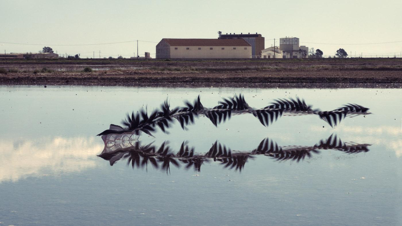 Bird Flight Patterns Interesting Decorating Ideas