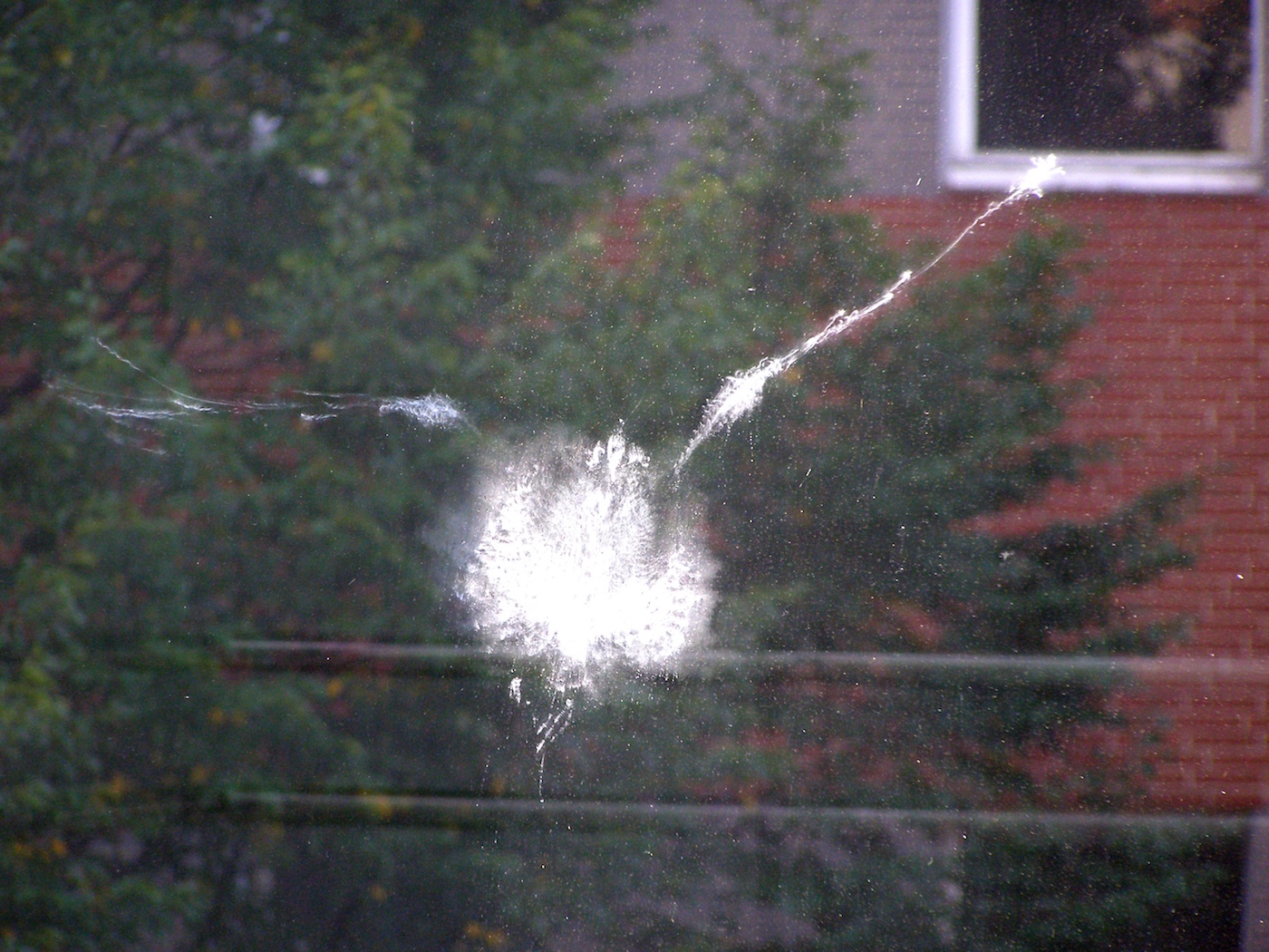 The imprint of a bird that crashed into a window (photo by Erich Ferdinand/Wikimedia)