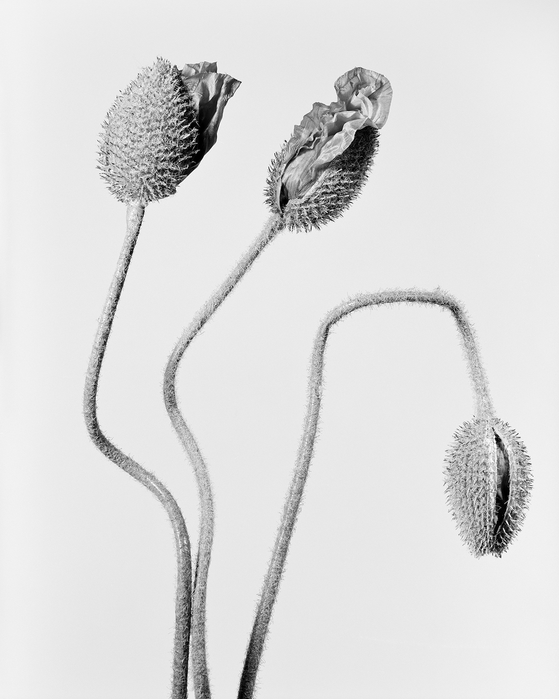 Robert Voit: The Alphabet of New Plants