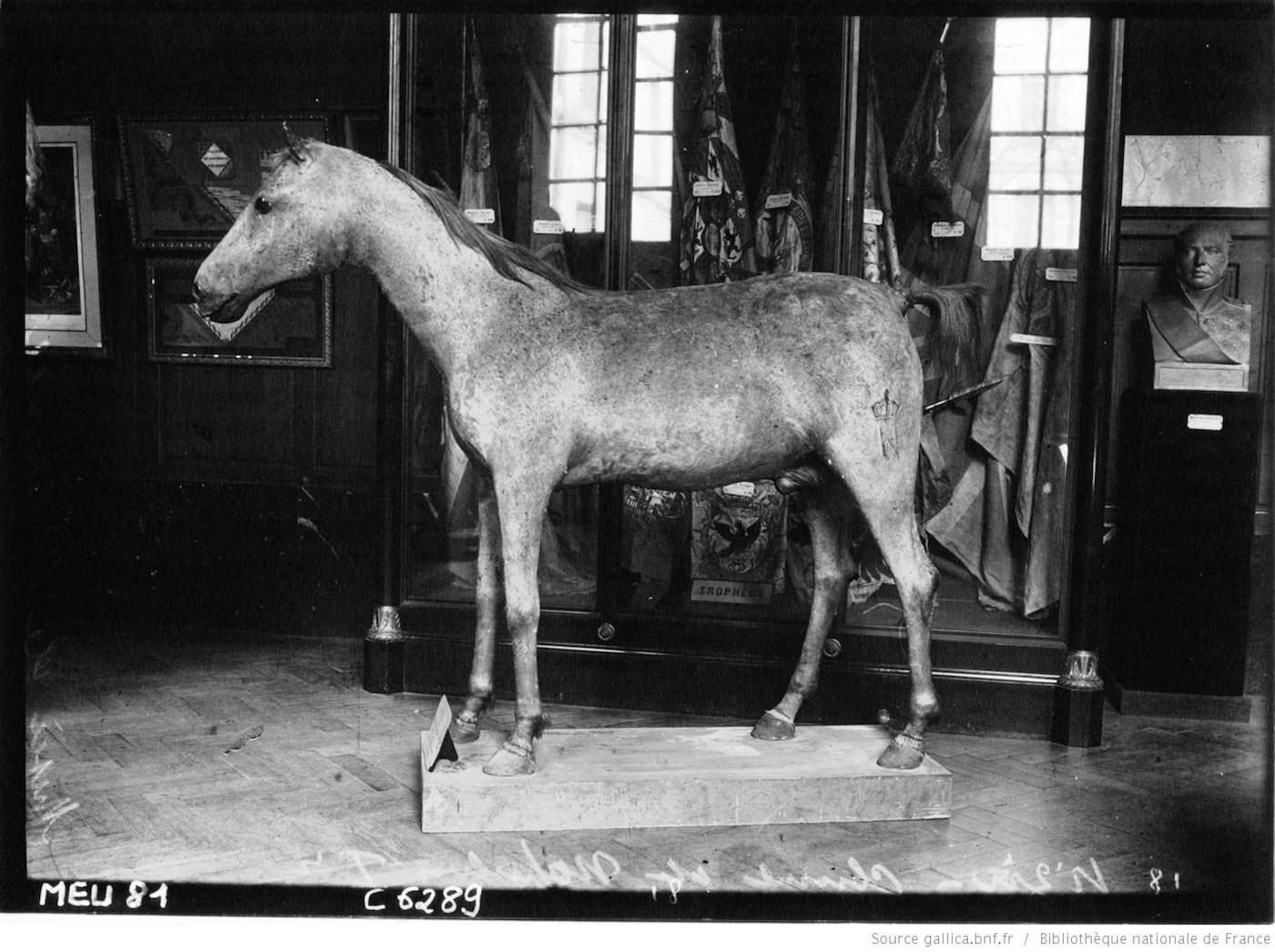 Le Vizir in the Musée de l'Armée in 1909 (via Agence de presse Meurisse/BnF Gallica)