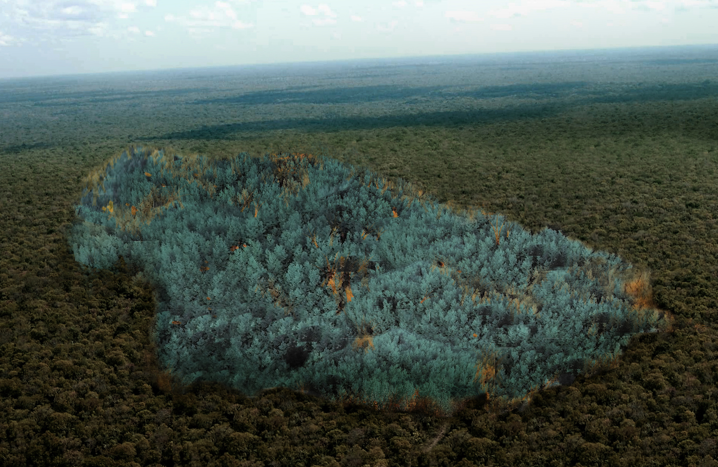 """Stéfane Perraud and Aram Kebabdjian's """"La Zone Bleue"""" proposal for a genetically modified blue forest (courtesy Andra)"""