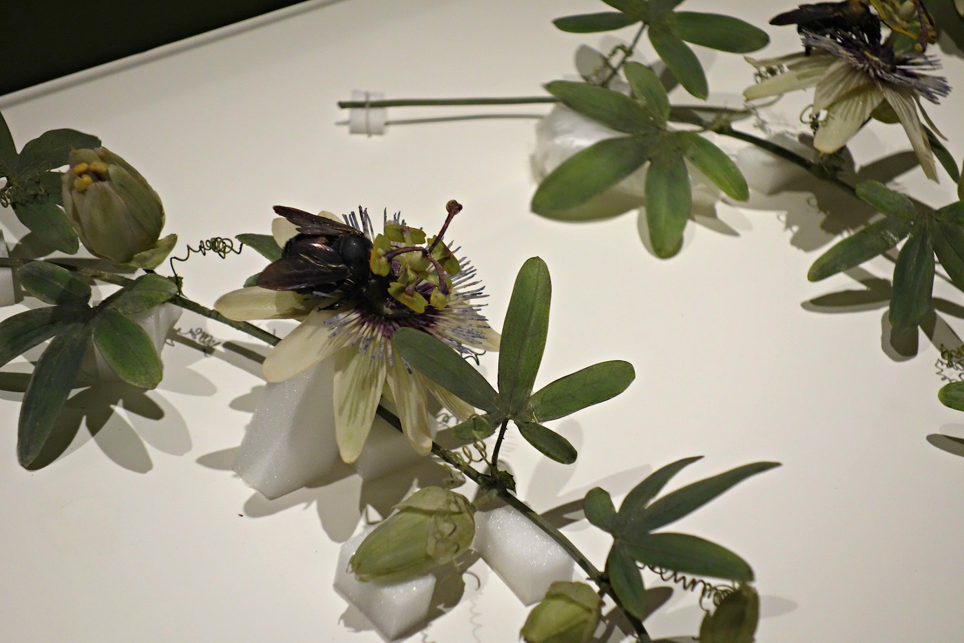 Installation view of the Glass Flowers Gallery at the Harvard Museum of Natural History