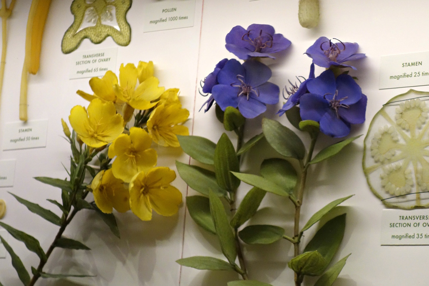 installation view of the glass flowers gallery at the harvard museum of natural history - Glass Flowers