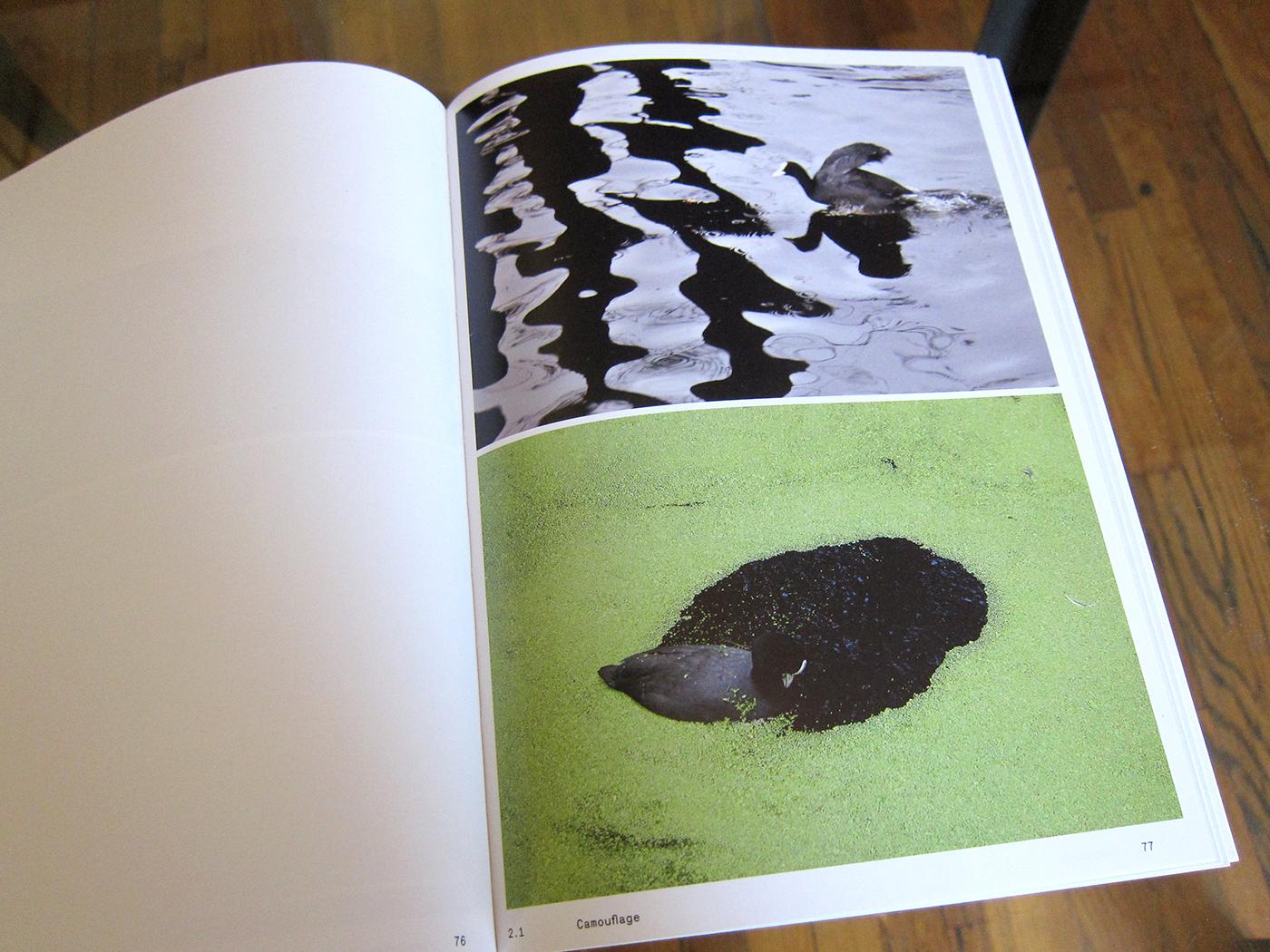 ornithology3