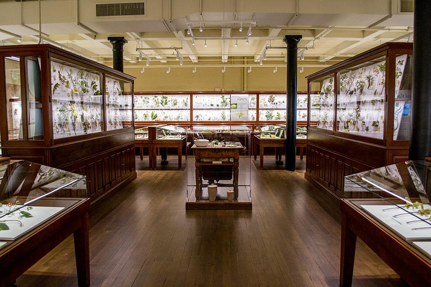 Harvard's Garden of Glass Flowers Blooms Again