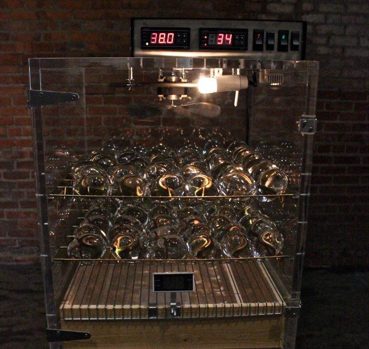 An art-incubator, housing glass eggs.