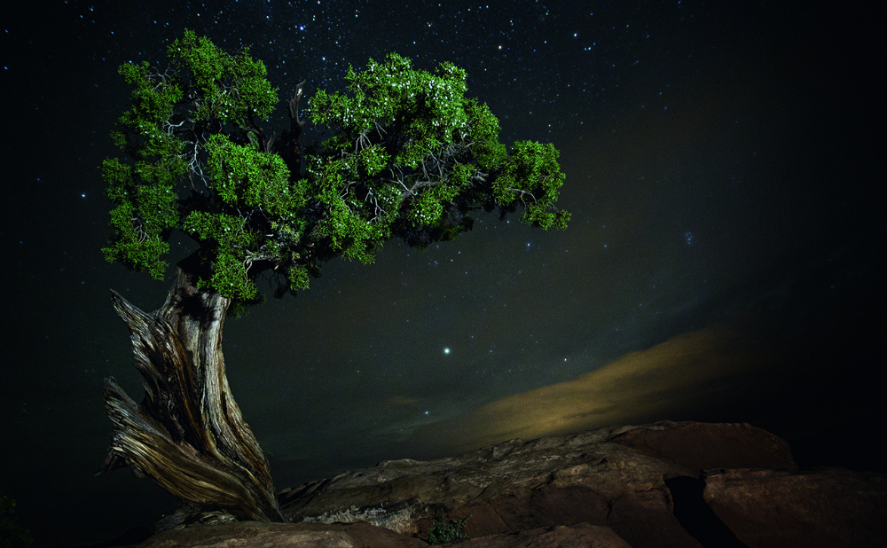 ancienttreesfeatured