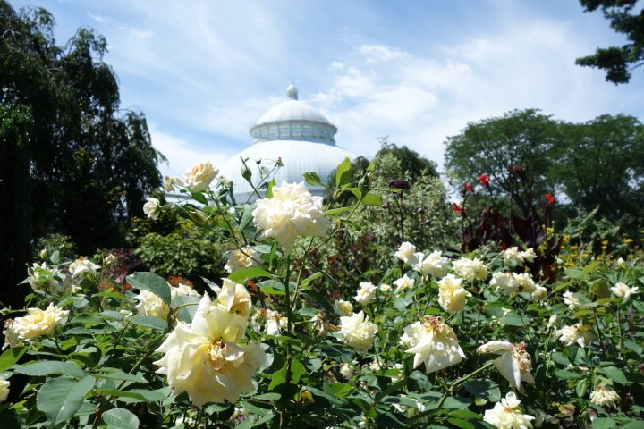 New York Botanical Garden in the Bronx, one of the sites on the What's Out There Cultural Landscapes Guide to New York City (photo by the author for Hyperallergic)