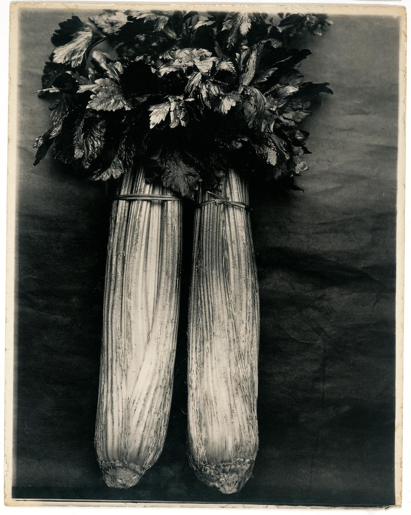 "Charles Jones, ""Vegetables, Celery Standard Bearer"" (© 1998 and 2016 Sean Sexton)"