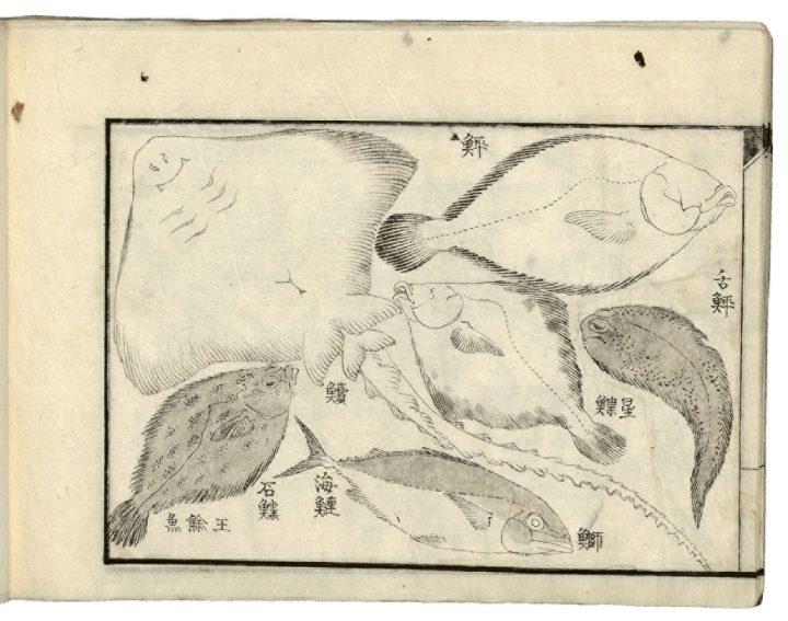 hokusairay