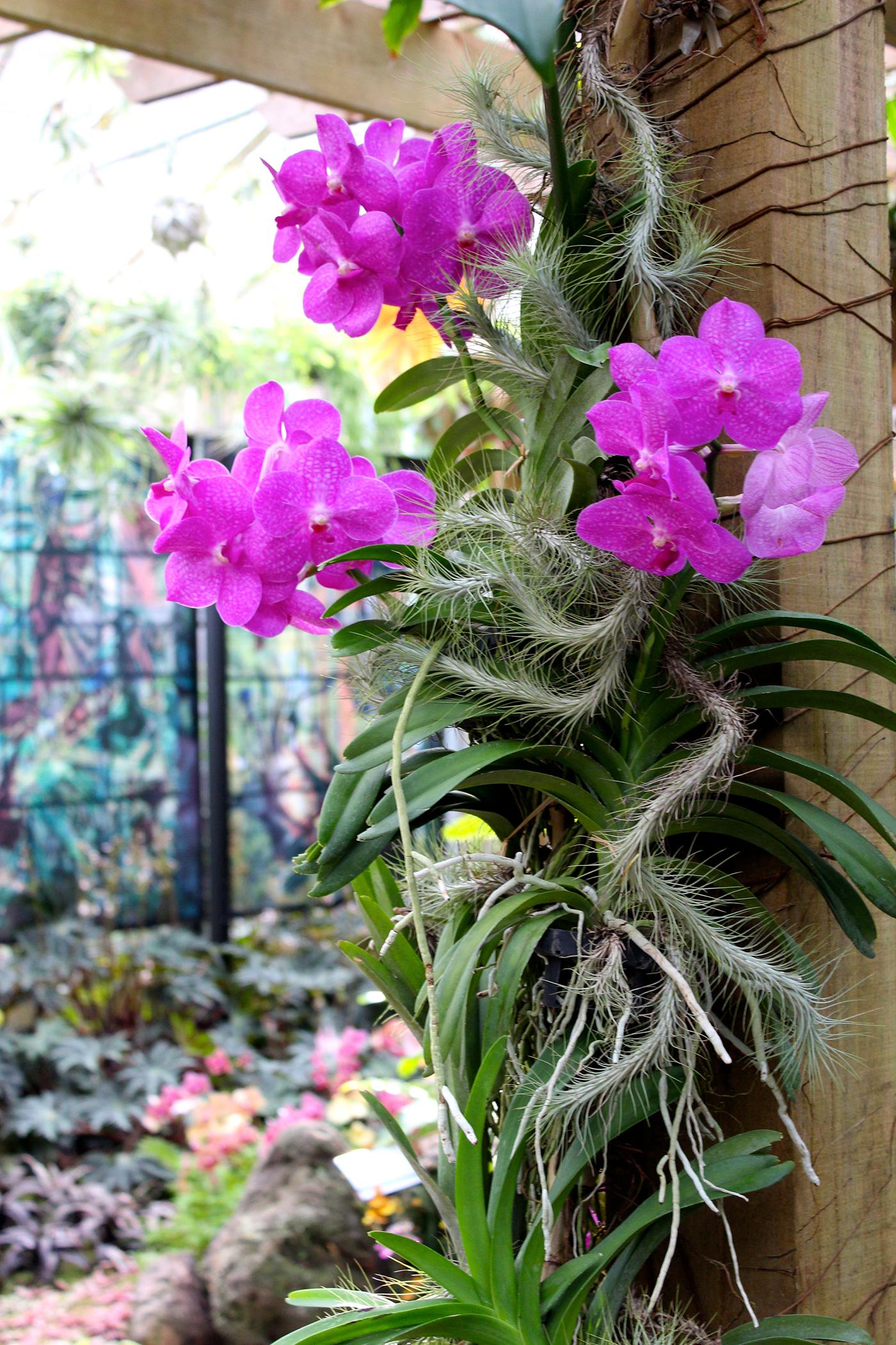 A Botanical Garden Blooms with Chagall Artes & contextos Selby10