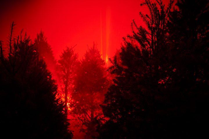 "Willy Kautz, ""Ver la madera por el árbol"" (2016), pine trees, fog machine, and light, dimensions variable"