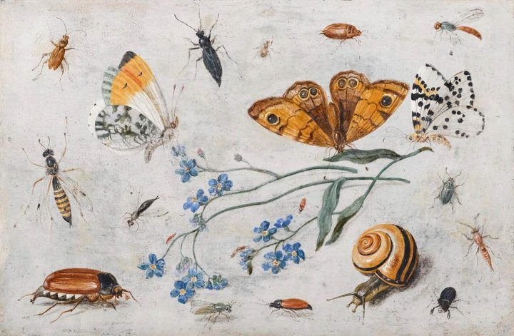 Jan van Kessel I, Study of Insects, Butterflies and a Snail with a Sprig of  Forget-Me-Nots (1659), oil on copper, 12 x 18 cm, private collection (image  from ...