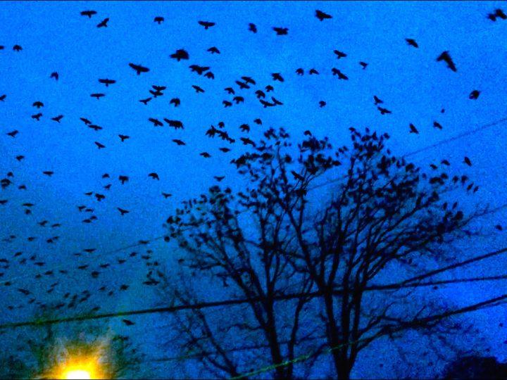 """Cauleen Smith, """"Crow Requiem"""" (2015, still) (image courtesy the artist)"""
