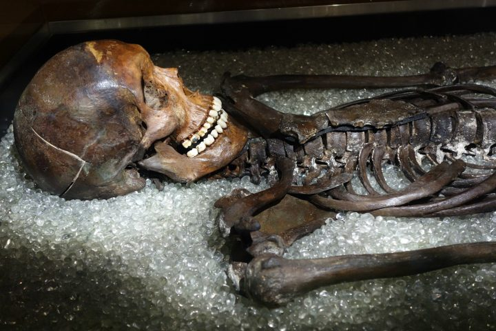 Museo Smithsonian.How A Smithsonian Collector S Skeleton Became Part Of The Exhibition