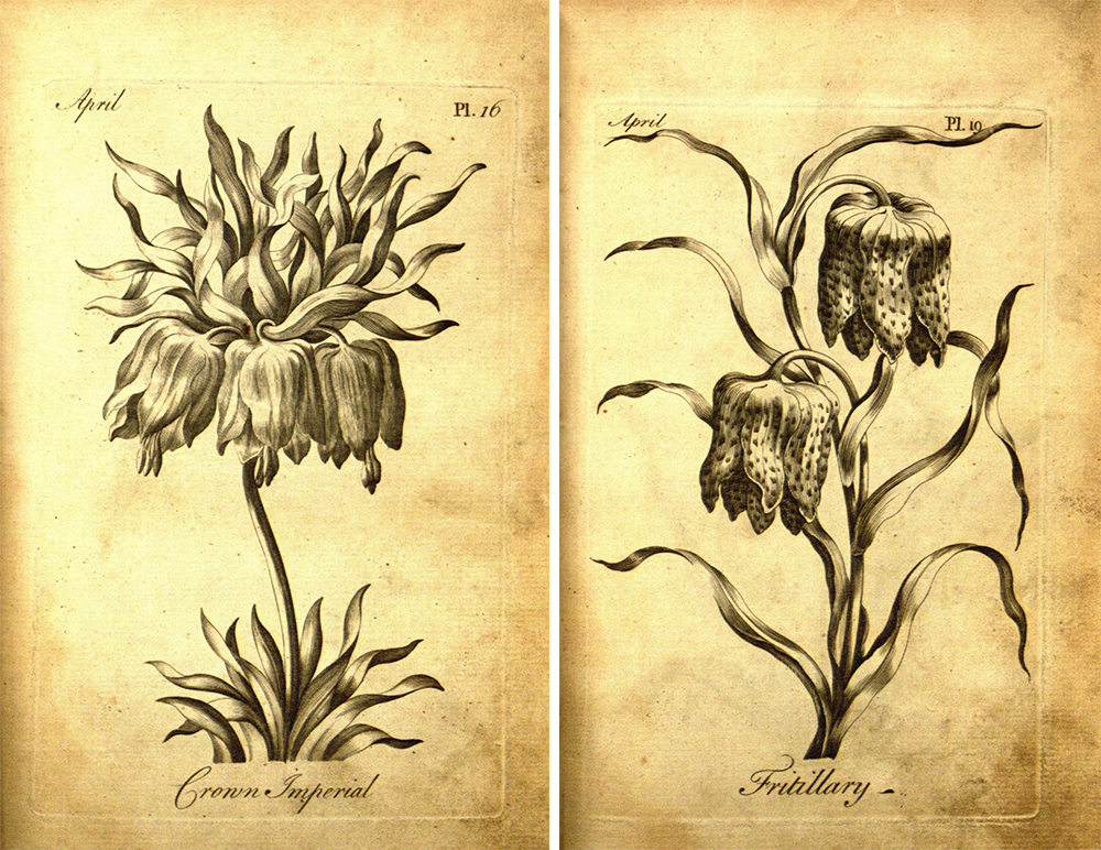 An 18th-Century Botanical Coloring Book for Adults