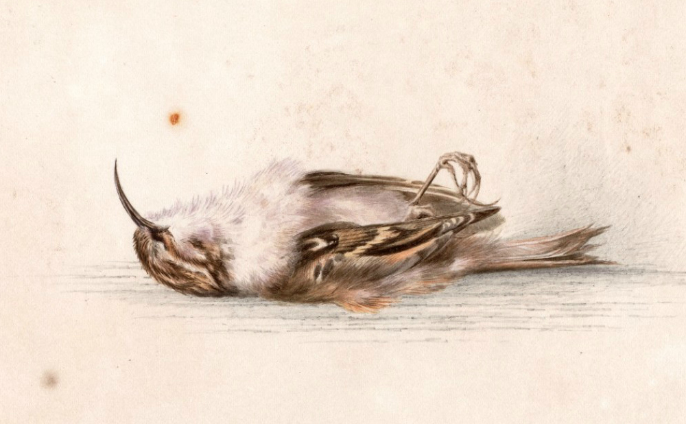 118-Year-Old Painting of a Dead Bird Discovered in a Hut in Antarctica