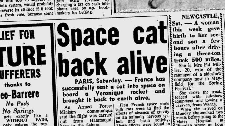 """""""Space cat back alive,"""" <em srcset="""
