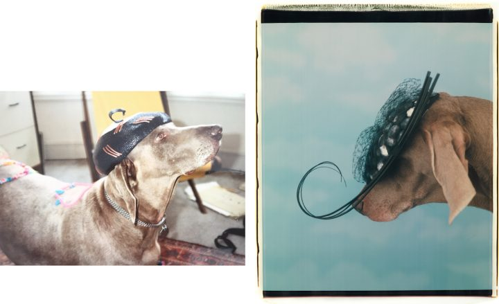 Dressing Up My Dog After William Wegman S Photos Of