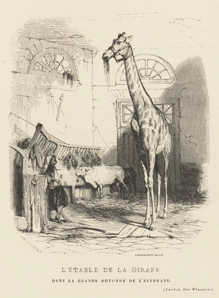 "Karl Girardet, ""L'étable de la girafe dans la grande rotonde de l'éléphant"" (1842) (via Metropolitan Museum of Art/Wikimedia)"