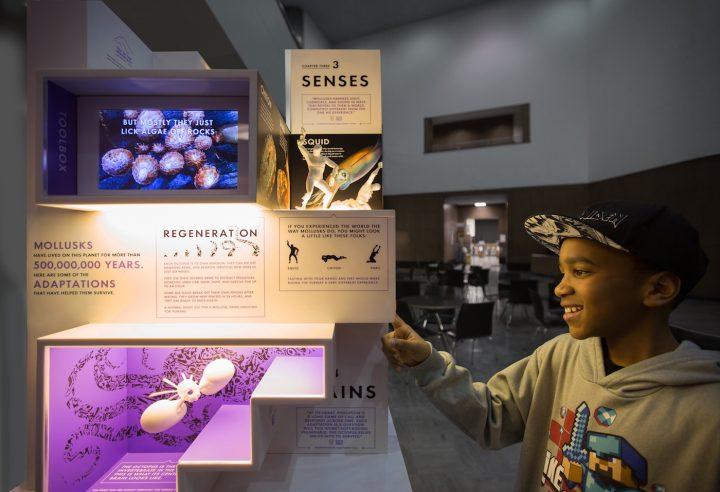 MICRO's Smallest Mollusk Museum (courtesy MICRO)