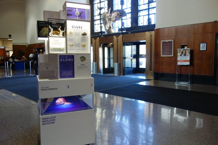 MICRO's Smallest Mollusk Museum at the Brooklyn Public Library (photo by the author for Hyperallergic)