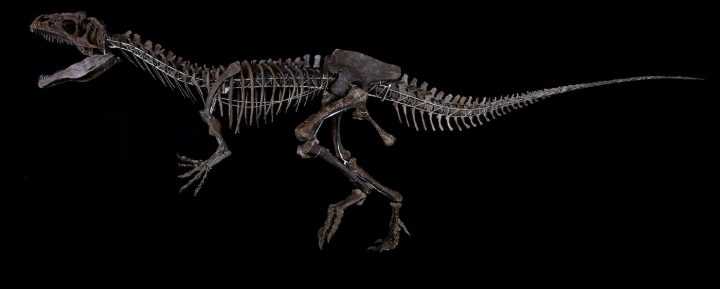 Unidentified dinosaur specimen from Wyoming sold by Aguttes auction house in Paris for $2.3 million (photo courtesy Aguttes)