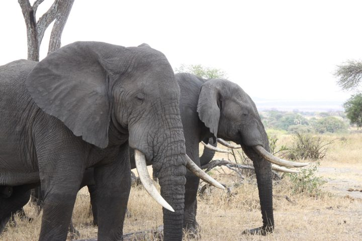 Elephants in Tarangire National Park, Tanzania (image via Andrey Filippov's Flickrstream)