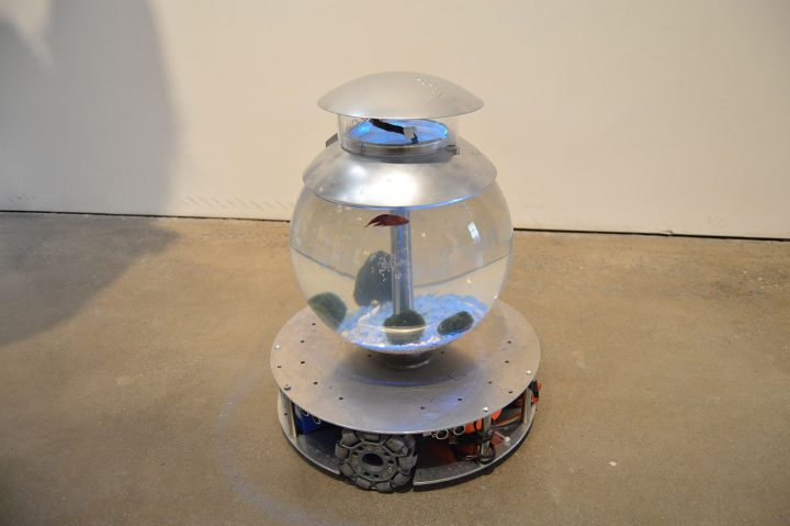 """Yve Yang, """"I'm a Fish"""" (2019), installation: 15 inches in diameter, 17.7 inches in height; material: fish, pebble, acrylic tank, all directional motion base, camera vision motion tracking system, python, circuit board, battery; Edition 3+1"""