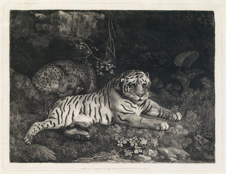 """George Stubbs, """"Two Tygers (or A Tiger and a Sleeping Leopard)"""" (1788), etching (image courtesy Swann Galleries)"""