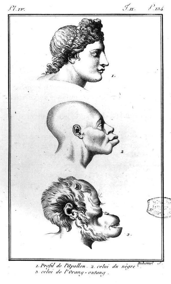 Virey 1801 copy