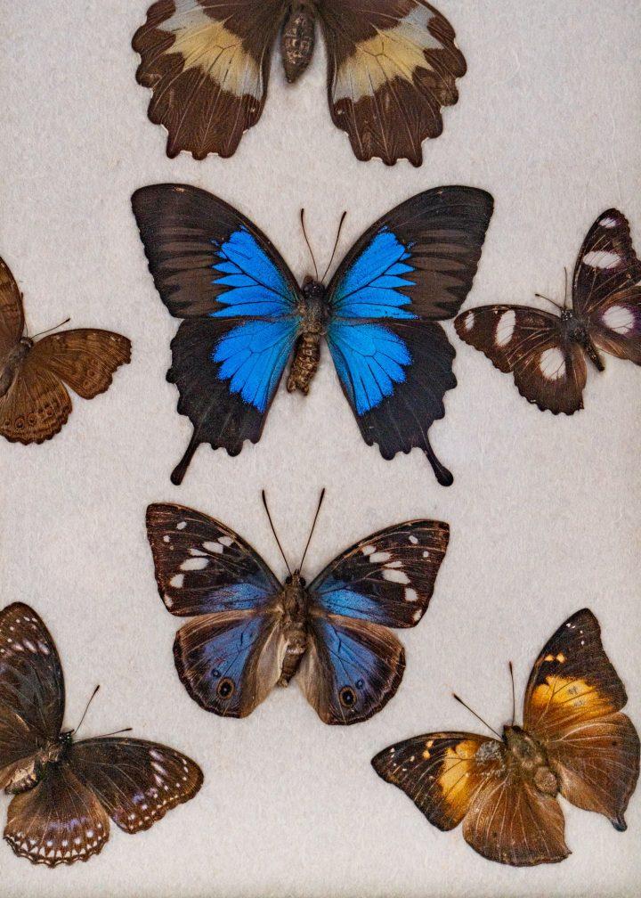 butterflies details mslack 4 copy