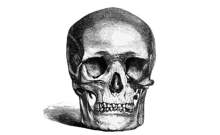 penn museum pod skull