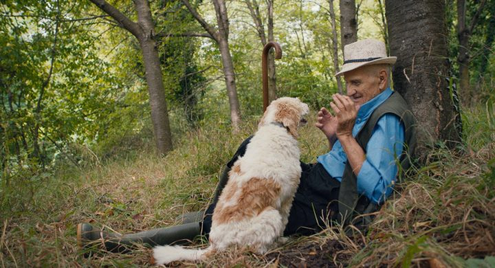 In the Forests of Italy, Old Men Search for Truffles With Their Dogs