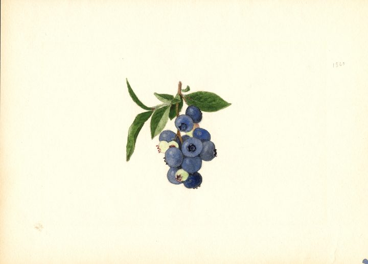 Before Photography, Watercolorists Documented the Luscious Variety of Fruits and Nuts