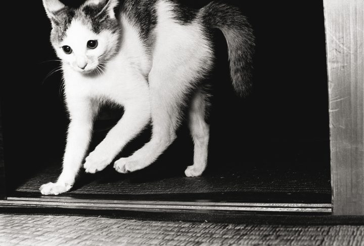 For Masahisa Fukase, Cats Were Much More Than Cute