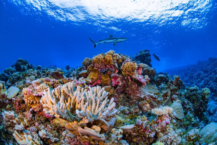 Scientists Create the First Complete Map of the World's Coral Reefs